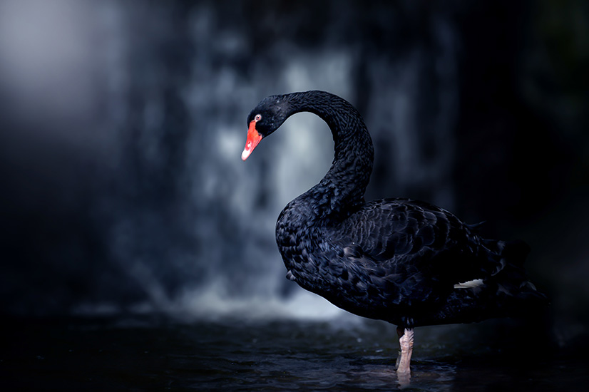 Is the coronavirus a black swan like no other