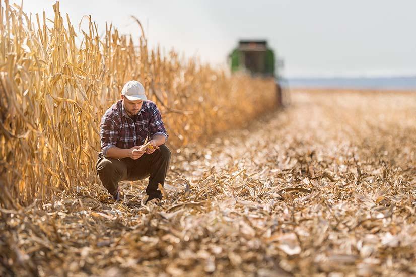 Aussie farmers set to lose $36bn