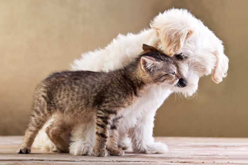 Pet, dog, cat, pet-friendly, retirement living