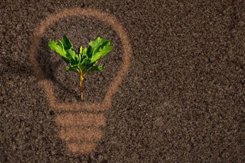 sprout plant lightbulb soil investing in renewable energy stocks