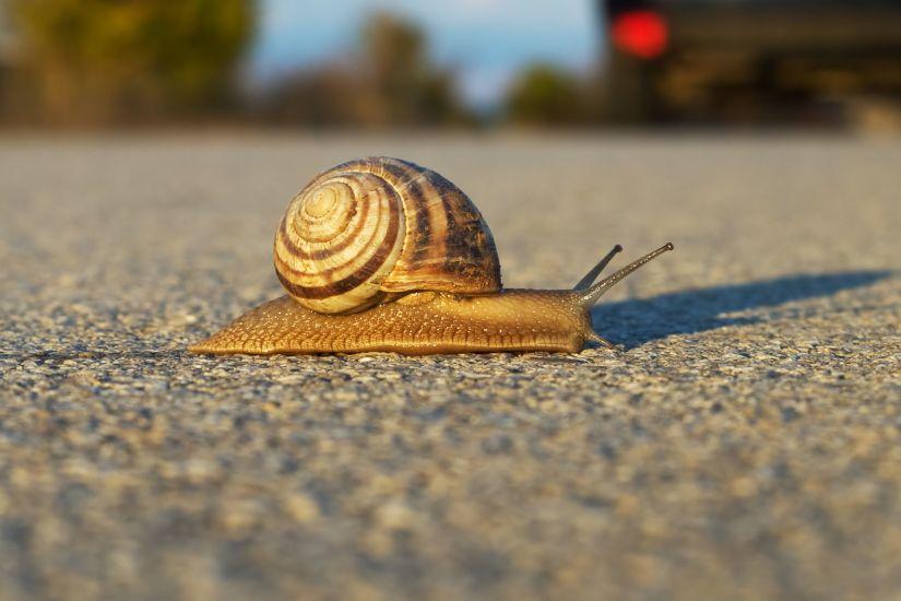 Slow, snail, economy, investing