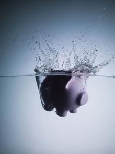 sinking pig